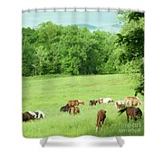 Grazing In The Morning Shower Curtain