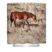 Grazing In The Winter Grass Shower Curtain