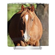 Grazing Mare  Shower Curtain