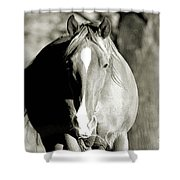 Grazing Mare - Southern Indiana Shower Curtain