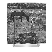 Grazing Shower Curtain by Michael Peychich