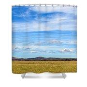 Grazing Sheep - Maniototo Plain Shower Curtain