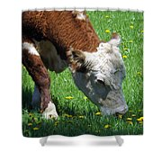Grazing Time Shower Curtain
