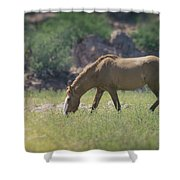 Grazing Wild Mustang  Shower Curtain
