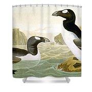 Great Auk (alka Impennis): Shower Curtain
