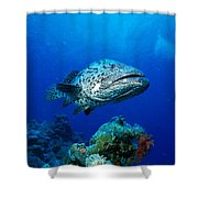Great Barrier Reef Shower Curtain by Peter Stone - Printscapes