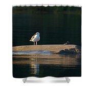 Great Black-backed Gull  Shower Curtain