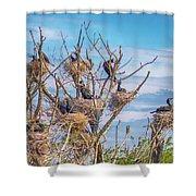 Great Black Cormorants Colony - Danube Delta Shower Curtain