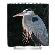 Great Blue At Rest Shower Curtain