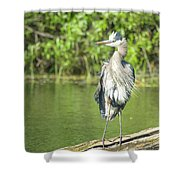 Great Blue Hair Shower Curtain
