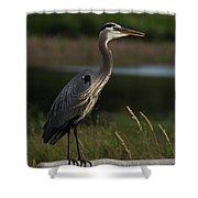 Great Blue Heron 1 Shower Curtain
