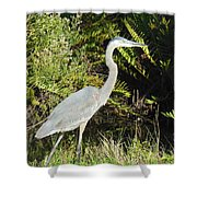 Great Blue Heron #2 Shower Curtain
