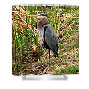 Great Blue Heron 2 Shower Curtain