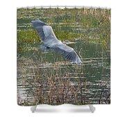 Great Blue Heron 2 Shower Curtain
