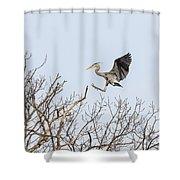 Great Blue Heron 2014-4 Shower Curtain