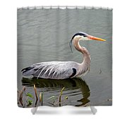 Great Blue Heron 4 Shower Curtain