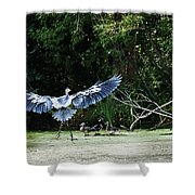Great Blue Heron And Wood Ducks Shower Curtain