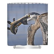 Great Blue Heron Catch Down The Hatch Shower Curtain