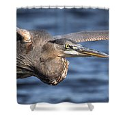 Great Blue Heron Close-up Shower Curtain