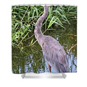 Great Blue Heron Closeup Shower Curtain