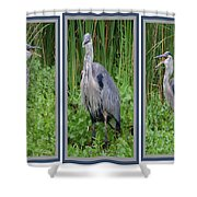 Great Blue Heron Collage Shower Curtain