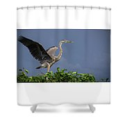 Great Blue Heron Delray Beach Florida Shower Curtain
