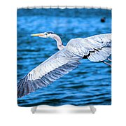 Great Blue Heron Flight Shower Curtain