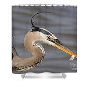 Great Blue Heron Gets Twofer Shower Curtain