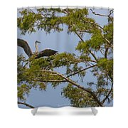 Great Blue Heron In Cypress  Shower Curtain