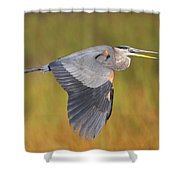 Great Blue Heron In Flight Shower Curtain by Bruce J Robinson