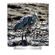 Great Blue Heron In Galapagos Shower Curtain