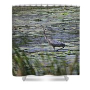 Great Blue Heron In Maine  Shower Curtain