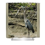 Great Blue Heron In Ozarks Shower Curtain