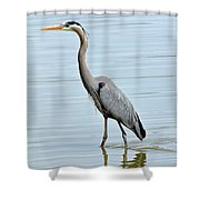 Great Blue Heron In River Shower Curtain
