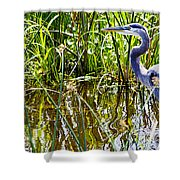 Great Blue Heron In The Wetlands Shower Curtain