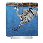 Great Blue Heron Landing In The Marsh Shower Curtain