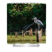 Great Blue Heron Mouth Shower Curtain
