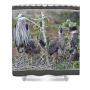 Great Blue Heron Nest Shower Curtain