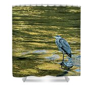 Great Blue Heron On A Golden River Shower Curtain