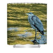 Great Blue Heron On A Golden River Vertical Shower Curtain