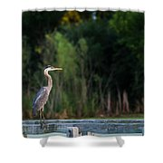 Great Blue Heron On A Handrail Shower Curtain