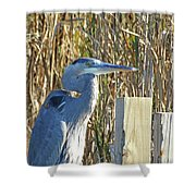Great Blue Heron On Guard Shower Curtain