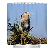 Great Blue Heron On Nest In A Palm Tree Shower Curtain