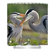 Great Blue Heron Pair 3 Shower Curtain