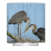 Great Blue Heron Pair Shower Curtain