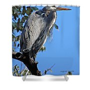 Great Blue Heron Perched Shower Curtain