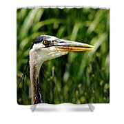 Great Blue Heron Portrait Shower Curtain