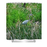 Great Blue Heron Series 1 Of 10 Shower Curtain