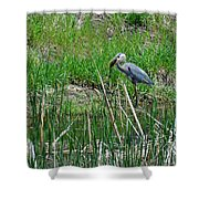Great Blue Heron Series 5 Of 10 Shower Curtain