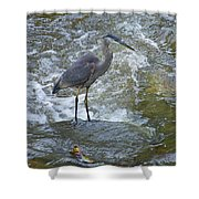 Great Blue Heron Standing In Stream Shower Curtain